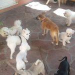 dvorište01 hotel za pse