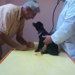 veterinar hotel za pse